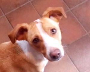 Rspca Dog Rescue Colwyn Bay